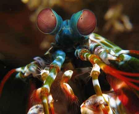 عجیب ترین حیوانات دنیا