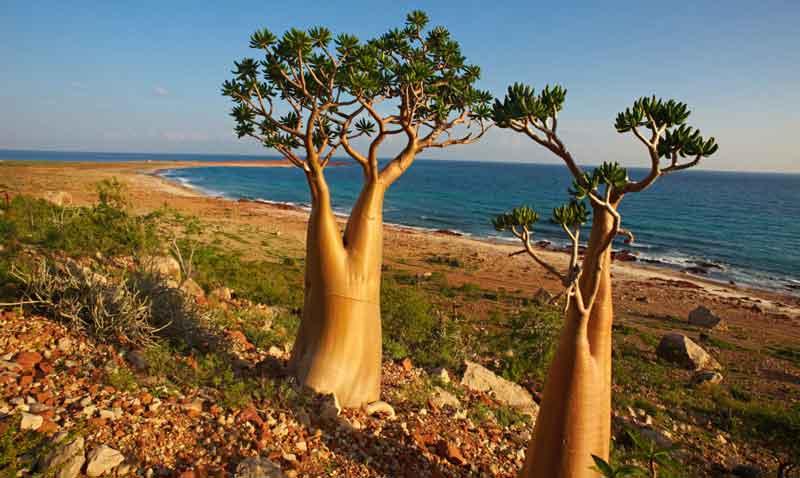 جزیره Socotra